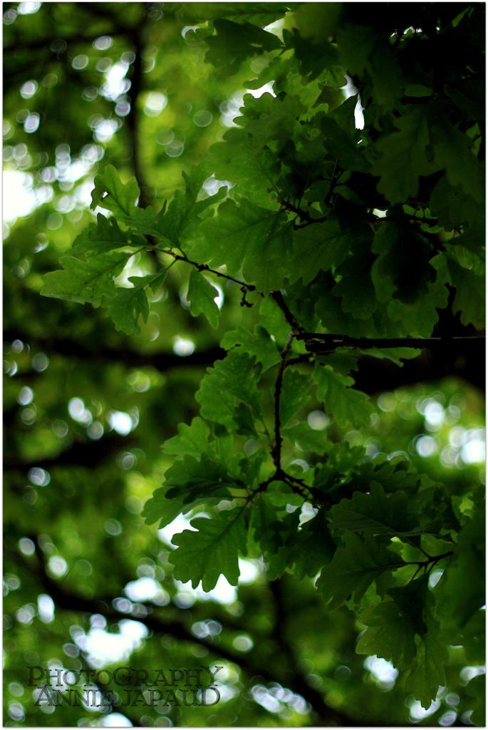 oak tree, leaves, bokeh, nature, green