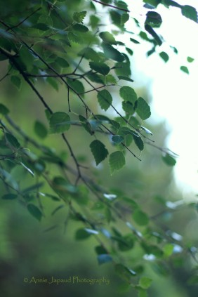 beautiful green tree foliage