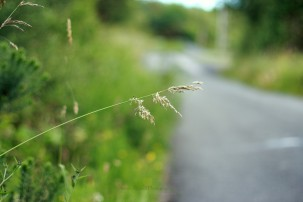 blade of grass by the road