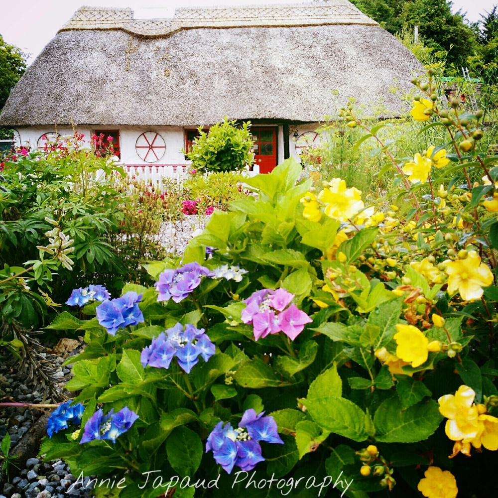 Thatched cottage surrounded by flowers